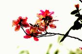 紫荊:DSC_3825.JPG