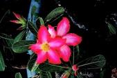 沙漠玫瑰:DSCN4743_副本.jpg