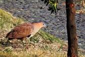 鳥類:DSCN4039.JPG
