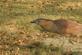 鳥類:DSCN4105.JPG