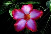 沙漠玫瑰:DSCN4744_副本.jpg