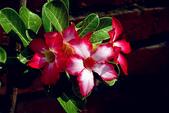 沙漠玫瑰:DSCN4752_副本.jpg