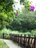 雙溪區虎壩潭:P5290004.jpg