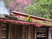 ~福山部落~:DSCN5283.jpg