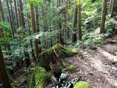 加里山:P1010461.JPG