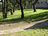 金山獅頭山公園:DSCN5759.JPG