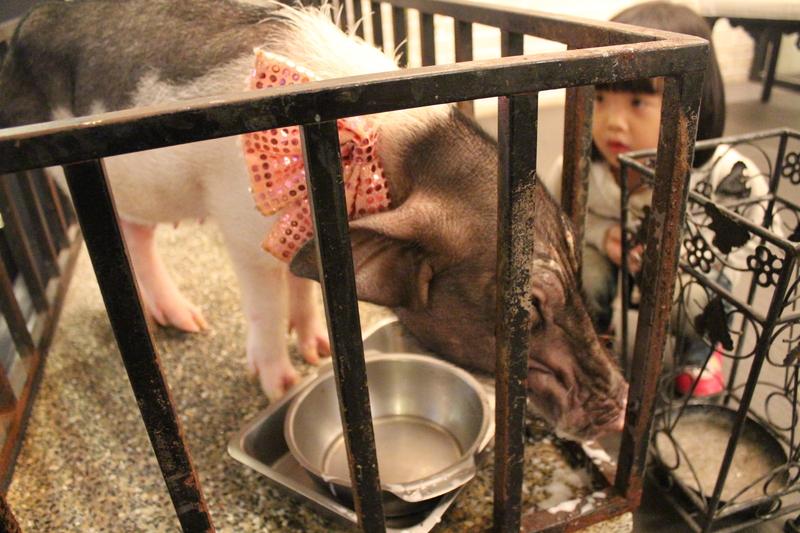 虎炭火燒肉:0225 282.JPG
