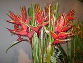 2010台北國際花卉博覽會:2010台北國際花卉博覽會-爭豔館