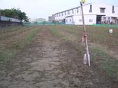 OKㄝ鮮Q綠蘆筍園-2:P1011597.JPG