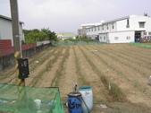 OKㄝ鮮Q綠蘆筍園-2:2013.06.04早上