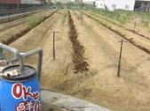 OKㄝ鮮Q-1/23:微破畦條施有機肥.JPG