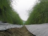 OKㄝ鮮Q綠蘆筍園-五:09.24二氧化氯.JPG