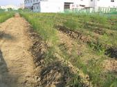 Okㄝ鮮Q綠蘆筍園3(06.30):鋤鋤蓋肥.JPG