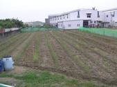 OKㄝ鮮Q綠蘆筍園-2:2013.06.15.JPG