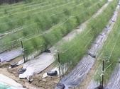 OKㄝ鮮Q綠蘆筍園-五:3英吋水管.JPG