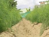 OKㄝ鮮Q綠蘆筍園(三):再來是整畦面.JPG