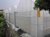 金龍溫室-綠蘆筍:北.JPG