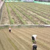 OKㄝ鮮Q綠蘆筍園-2:相簿封面