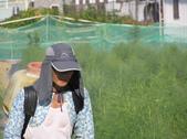 OKㄝ鮮Q綠蘆筍園(三):P1011645.JPG