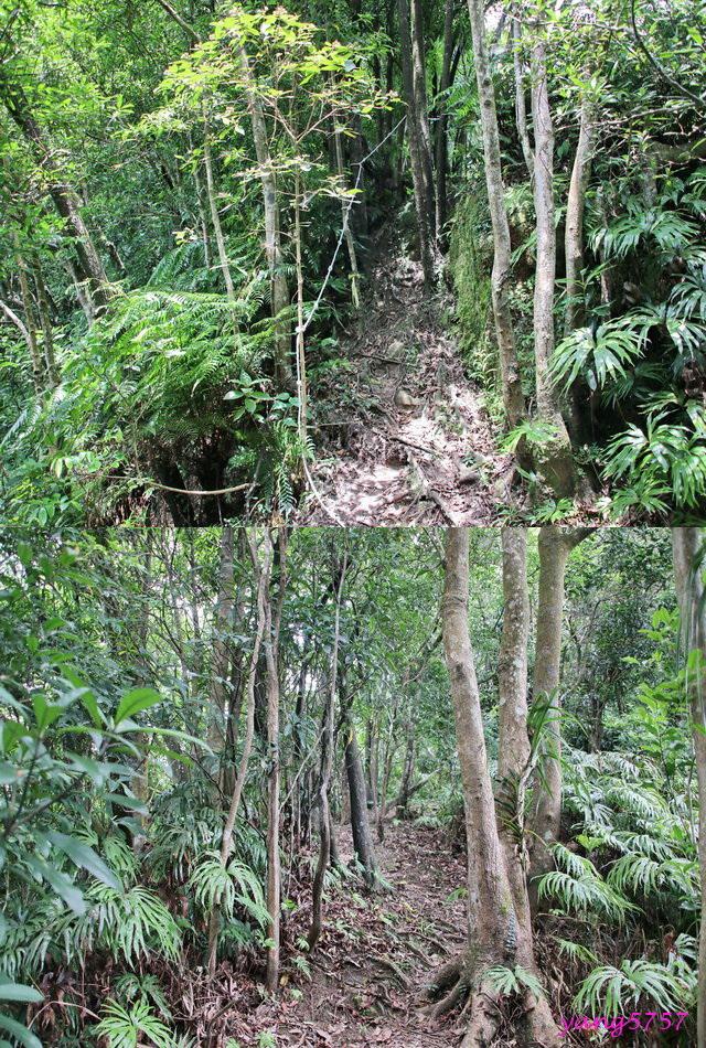 13雙扇蕨.jpg - 875畝畝山