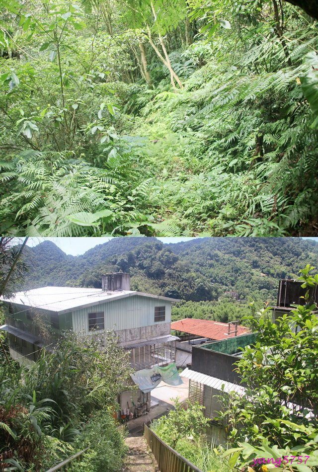 27植被掩徑.jpg - 874湳窟山