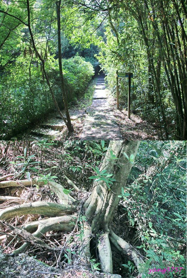 7觀音步道.jpg - 870分水龍山