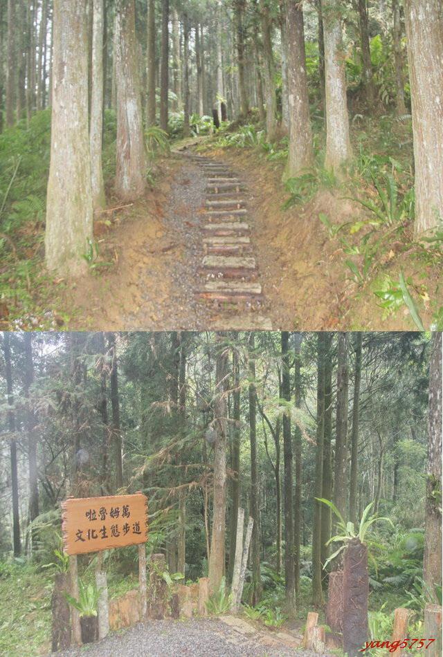37生態步道.jpg - 729光天高山