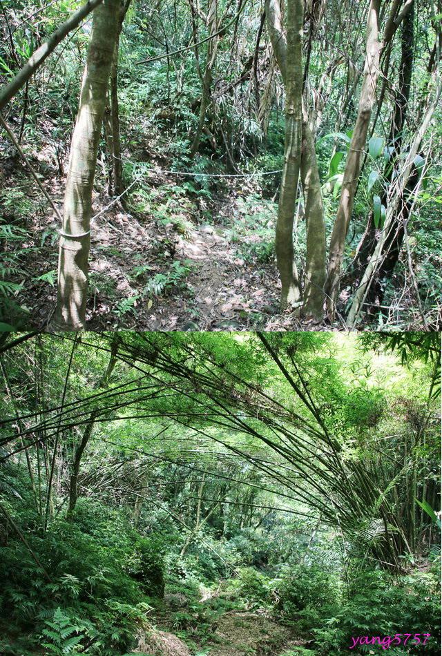 18竹林.jpg - 875畝畝山