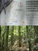 436東洗水山:15登山小徑.jpg