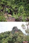 882南雅山:20鐵達尼岩.jpg