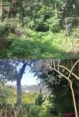 874湳窟山:3樹林入口.jpg