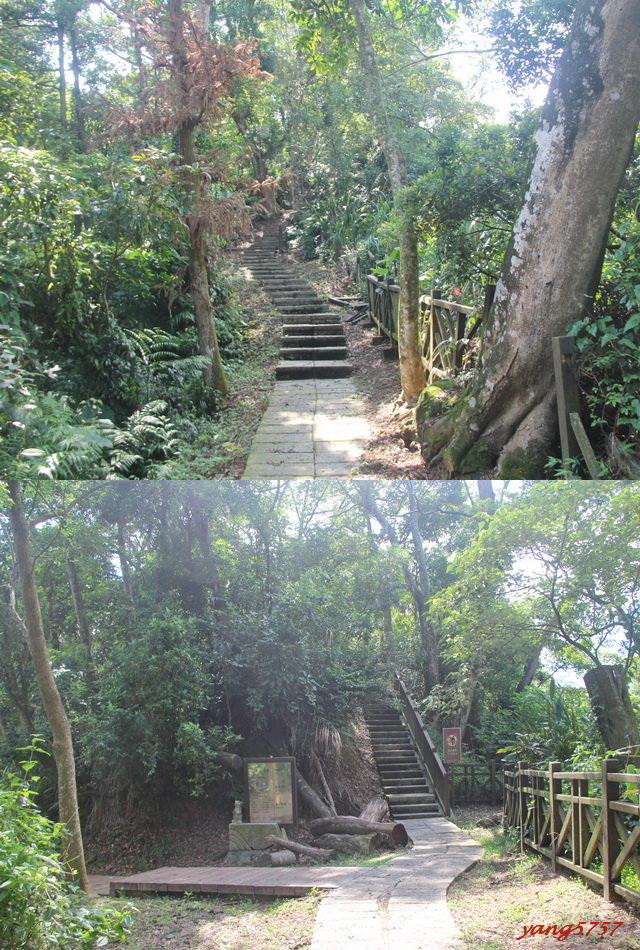 8石板階梯.jpg - 709石硦林場