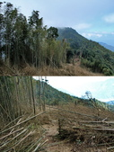 375鳳凰山:18砍伐區.jpg