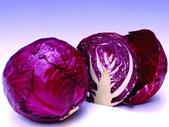 草本營養學:2012021009460209483.jpg