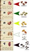 營養補充品 #DDS-1®PLUS益生菌+酵素+益生源3合1複方 :3.jpg