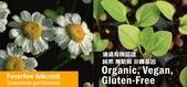 營養補充品:有機小白菊Feverfew液體提取物 盈康社1.jpg