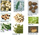 草本營養學:B17C.jpg
