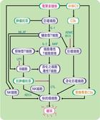 草本營養學:ylifextra-health-protection-pathways.jpg