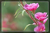 花卉欣賞:digital-flower-phorography-newflower138_wallcoo_com.jpg