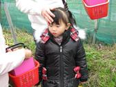2011大湖草莓(二):1182254704.jpg