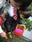 2011大湖草莓(二):1182254689.jpg