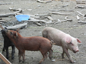 20110508 宜蘭綠色博覽會:1377823765.jpg
