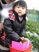 2011大湖草莓(二):1182254690.jpg