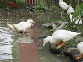 20110508 宜蘭綠色博覽會:1377823758.jpg