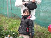 2011大湖草莓(二):1182254702.jpg