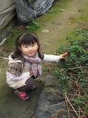 2011大湖草莓(二):1182254720.jpg