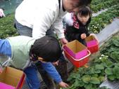 2011大湖草莓(二):1182254688.jpg